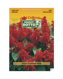 Dwarf Scarlet Sage (Salvia Splendens) - Gold Seeds By Sementi Dotto 0.23gr