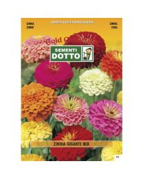 Giant Zinnia (Zinnia Elegans) - Gold Seeds By Sementi Dotto